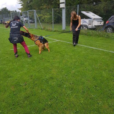 hundesport-11